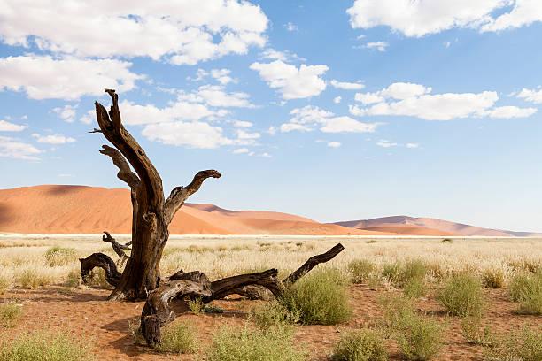 Deserted Tree stock photo
