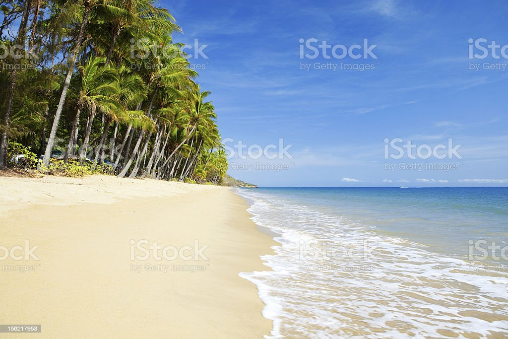 Deserted tropical beach with palm trees stock photo