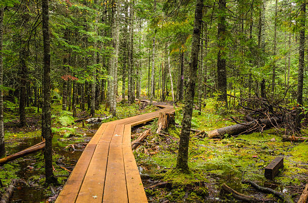 Deserted Winding Forest Walkway stock photo