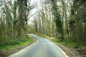 Deserted Winding Road Through a Forest