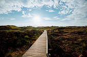 Wooden path with stairs oder boardwalk leading through dunes landscape on Amrum, North Frisian Islands, Schleswig-Holstein, Germany on a cloudy day