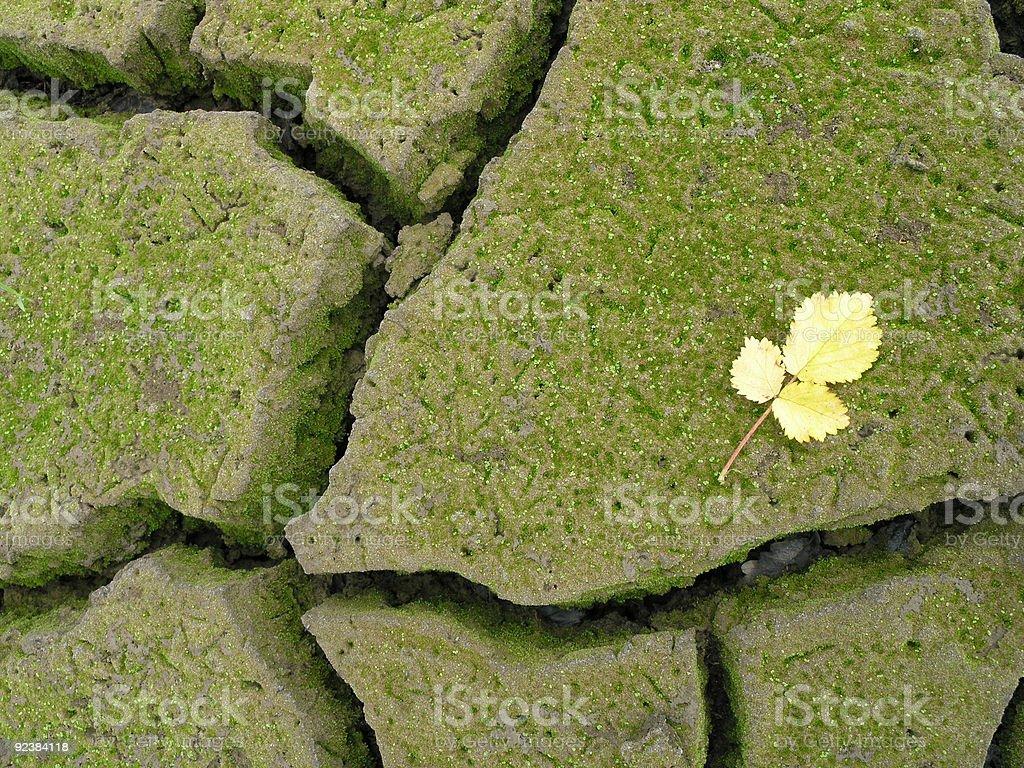 Desertification royalty-free stock photo