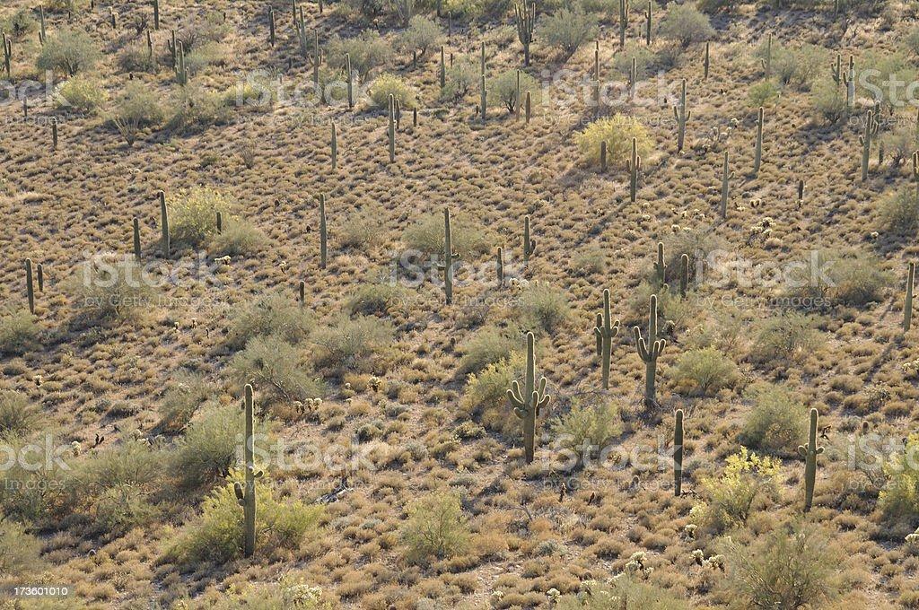Desertland royalty-free stock photo