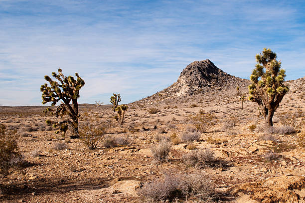 Desertscape  neicebird stock pictures, royalty-free photos & images