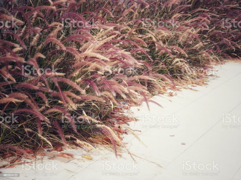Desho grass on the edge of the walkway in vintage colors in the concept of love, nostalgia, caring, past and happiness. - Royalty-free Abstract Stock Photo