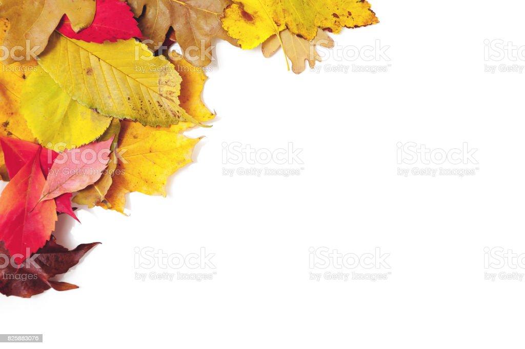 design element. Corner frame of fallen leaves stock photo