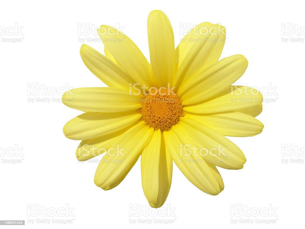 Design Elements: Yellow Flower Head stock photo