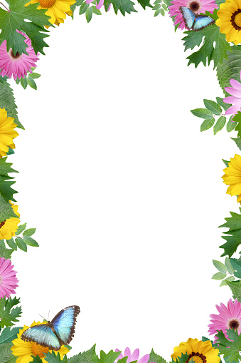 Design Flower Border With Butterfly Copy Space Stock Photo