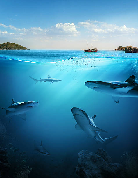 design template with underwater part - ocean under water stockfoto's en -beelden