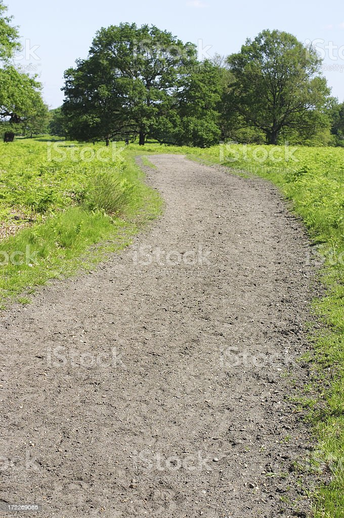 Bridle path soft earth pounded by hooves royalty-free stock photo