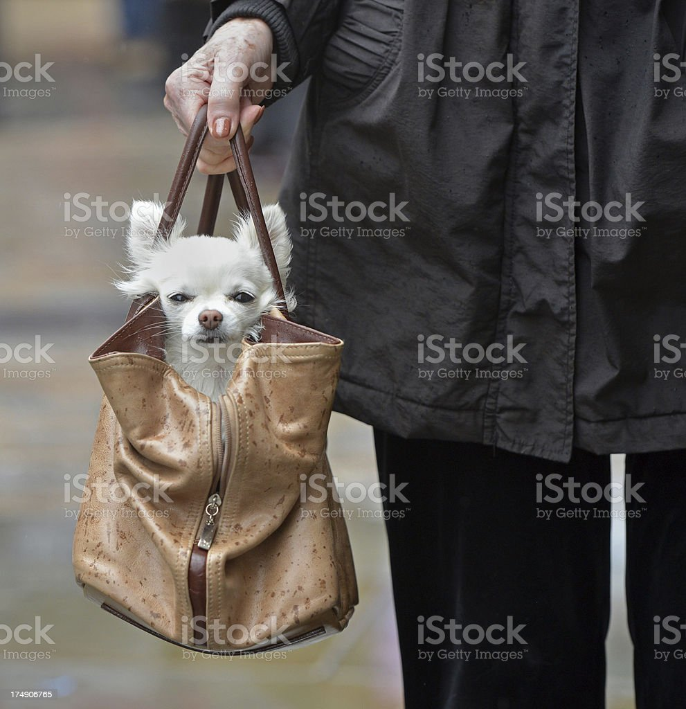 Designer Dog stock photo