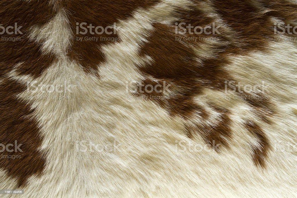 Designer Fur stock photo