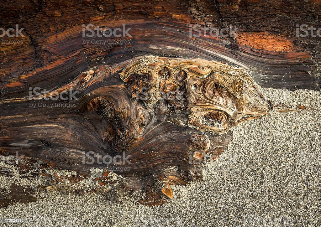 Designs in Driftwood royalty-free stock photo