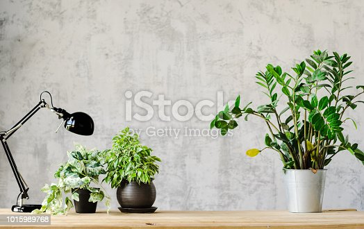 A desk for working with a lamp and flowers on a wooden surface and a concrete gray wall on the background. copy space