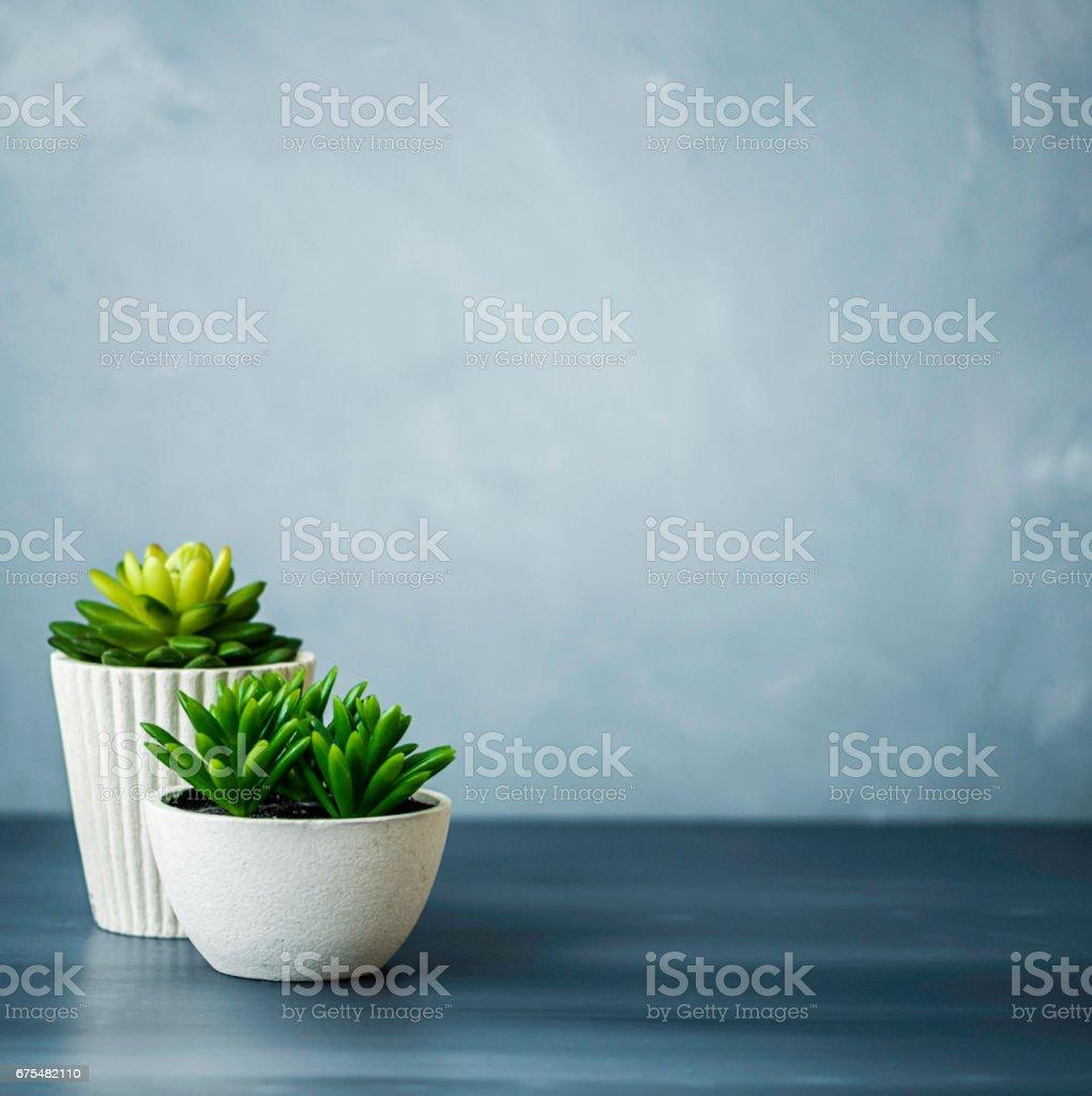 Bureau avec des plantes succulentes photo libre de droits