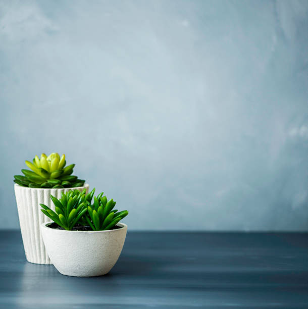 desk with succulents - soft focus stock photos and pictures
