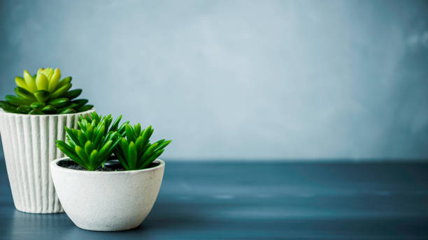 Desk with succulents stock photo