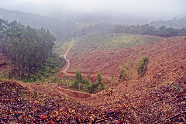 florestal de deforestación - deforestacion fotografías e imágenes de stock