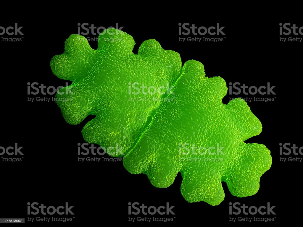 Desmid alga, Euastrum oblongum stock photo