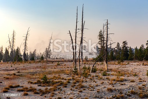 Steam rises from a desolate landscape in Yellowstone National Park