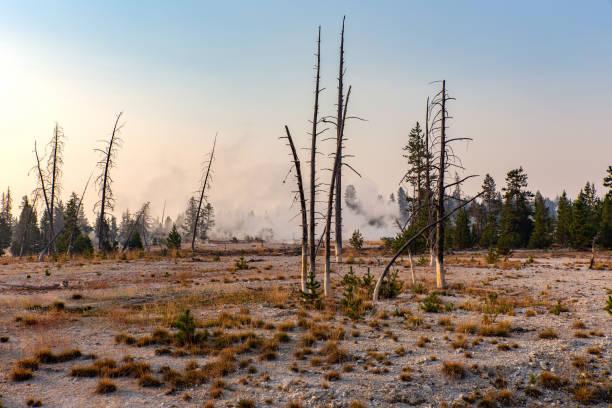 옐로스톤 국립공원의 황량한 풍경 - 황야 뉴스 사진 이미지