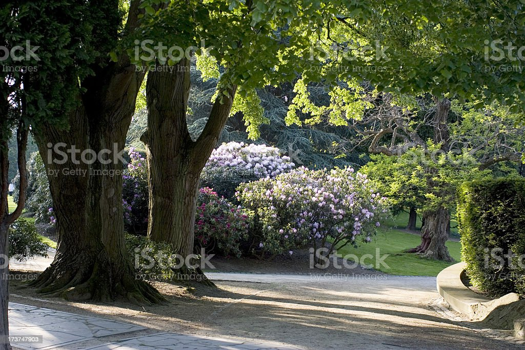 Desolate shadows in the park royalty-free stock photo