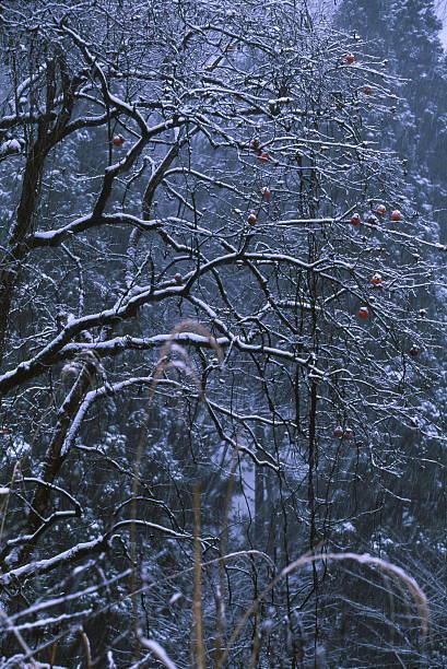 冬の荒涼とした雰囲気 ストックフォト