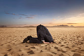 istock Desparate businessman hiding head in the sand 1202495563