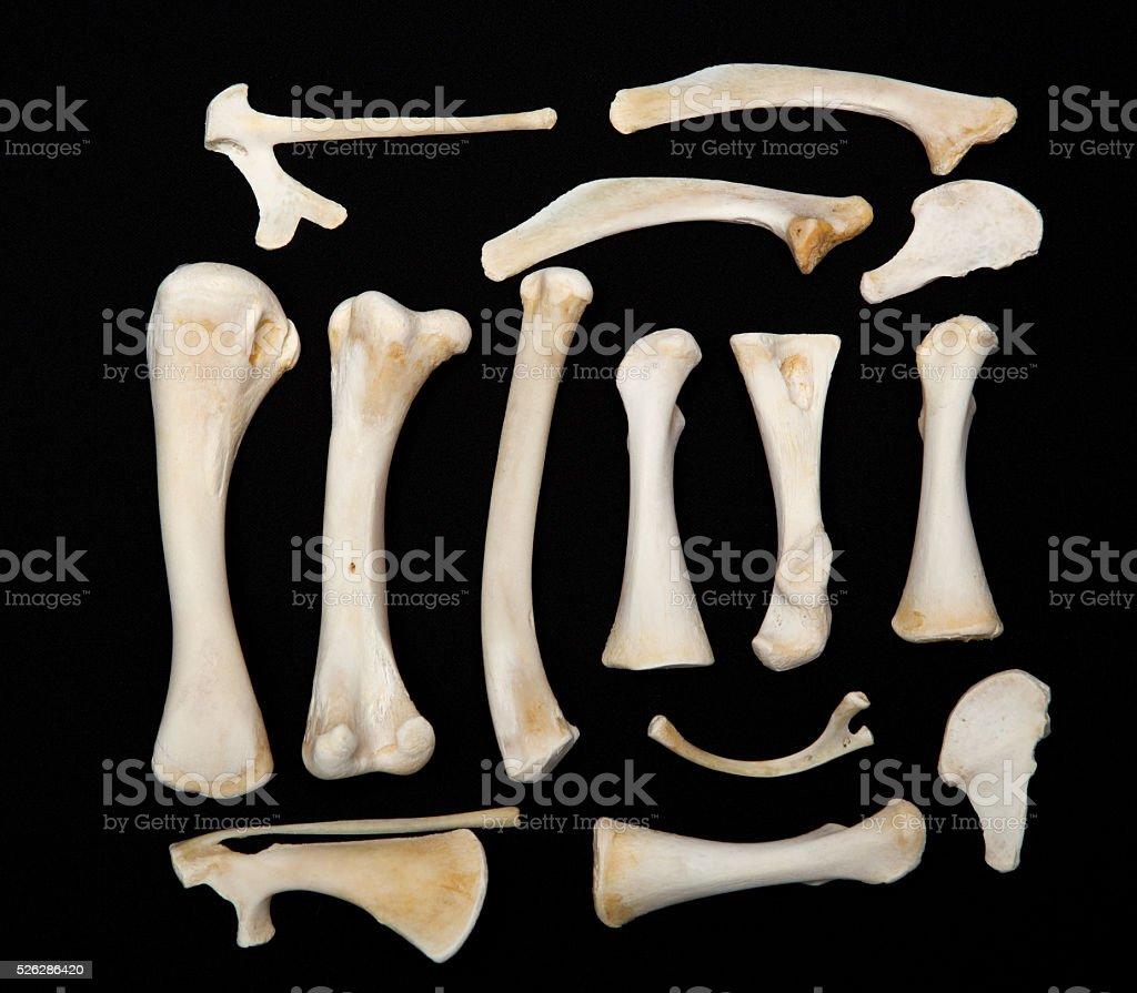 Dessicated Animal Bones stock photo