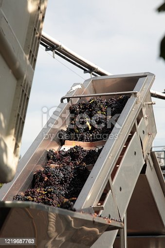 Destemming Processing with Destemmer and Crusher in Napa Valley, California, USA. Destemming is the process of removing the grape berries from the stems.