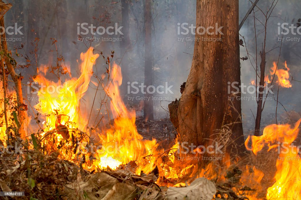 Destroyed by burning tropical forest ,Thailand stock photo