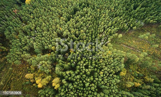 Destroying forest theme. Green forest with empty areas above top drone view