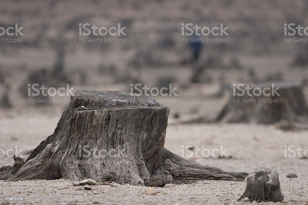 Destructed forest royalty-free stock photo