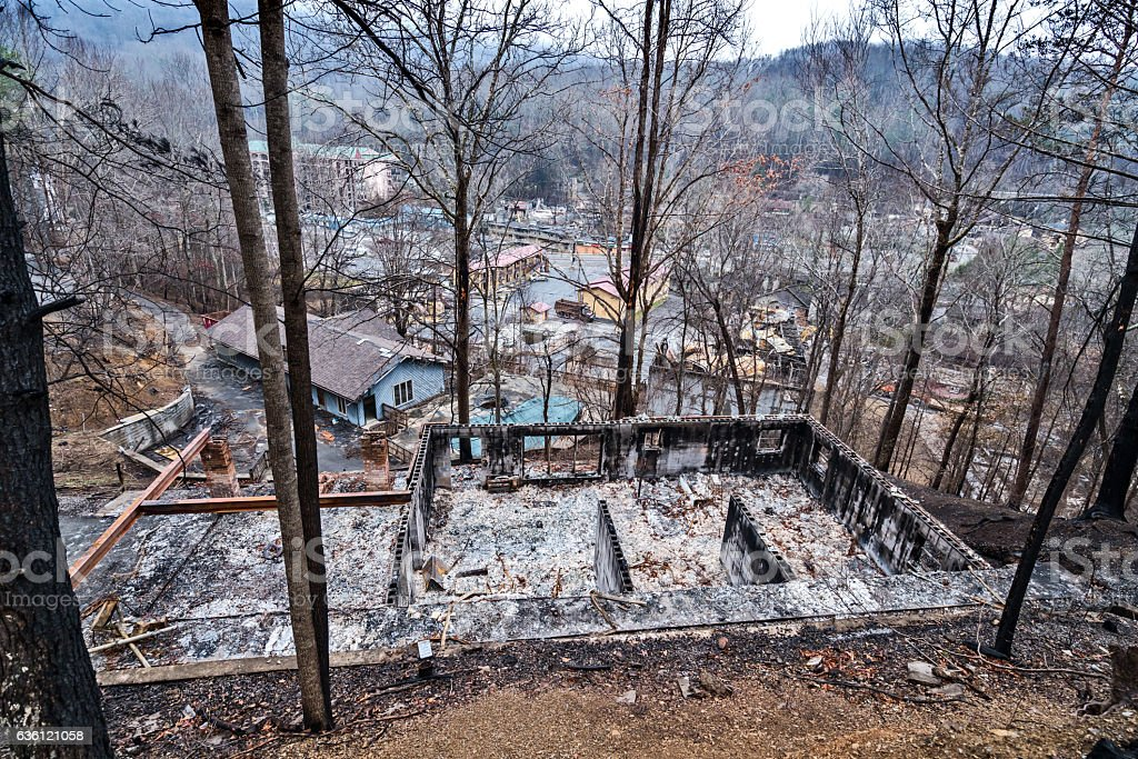 Destruction after forest fires royalty-free stock photo
