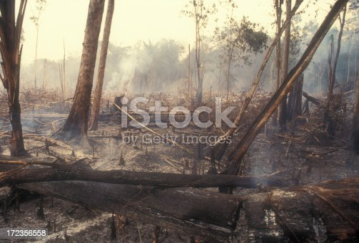 I used a slide film !Fire in the Amazon produces a lot of destruction forever. 60-70 percent of deforestation in the Amazon results from cattle ranches and soyabeans cultivation while the rest mostly results from small-scale subsistence agriculture.