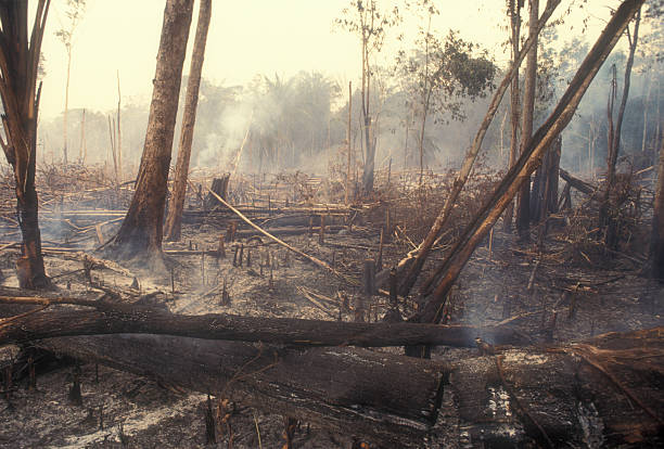 Destruction Global Warming I used a slide film !Fire in the Amazon produces a lot of destruction forever. 60-70 percent of deforestation in the Amazon results from cattle ranches and soyabeans cultivation while the rest mostly results from small-scale subsistence agriculture. deforestation stock pictures, royalty-free photos & images
