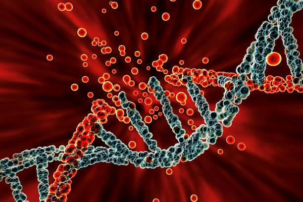 Destruction of DNA, damaged DNA stock photo