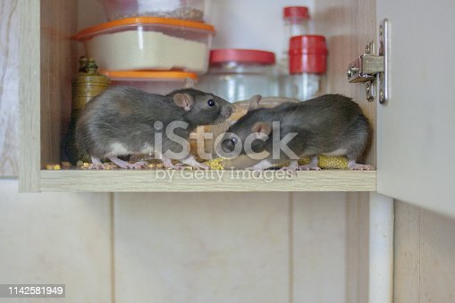 istock destruction of food stocks. mice are black two pieces. symbol 1142581949