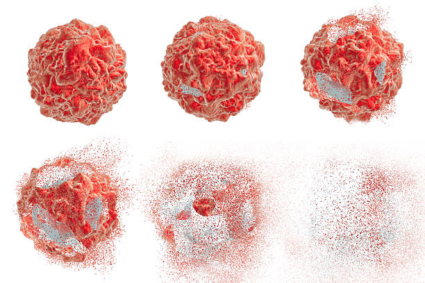 Destruction of tumor cell Destruction of a tumor cell. 3D illustration. Series of images showing different stages of destruction of a tumor cell. Can be used to illustrate effect of drugs, medicines, microbes, nanoparticles nanoparticle stock pictures, royalty-free photos & images