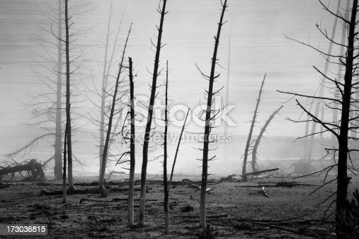 After the flames passed through - only skeletons of trees remain.