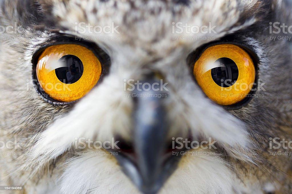 Detail eyes of eagle owl stock photo