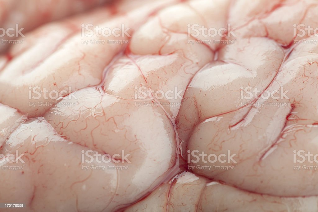 Detail from a Real Brain stock photo