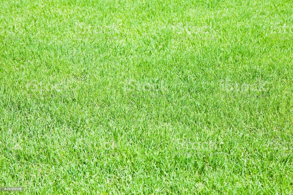 Detail of a beautiful field of fresh green grass stock photo
