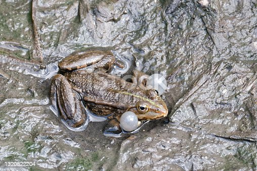 istock detail of a frog in a canal 1320822204