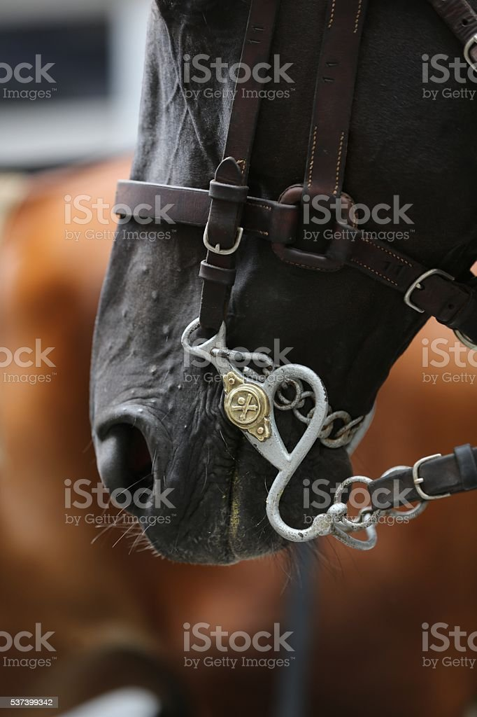 Detail of a military horse bridle stock photo