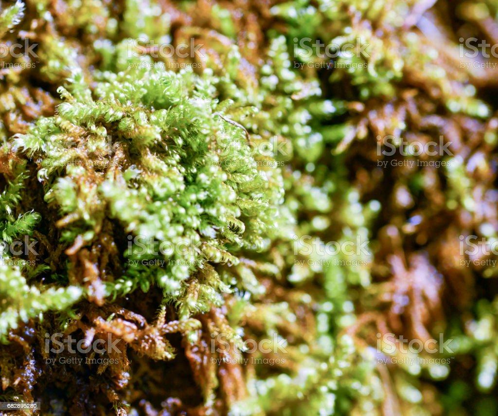 detail of a moss Lizenzfreies stock-foto