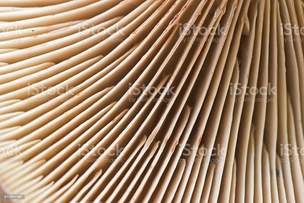detail of a mushroom stock photo