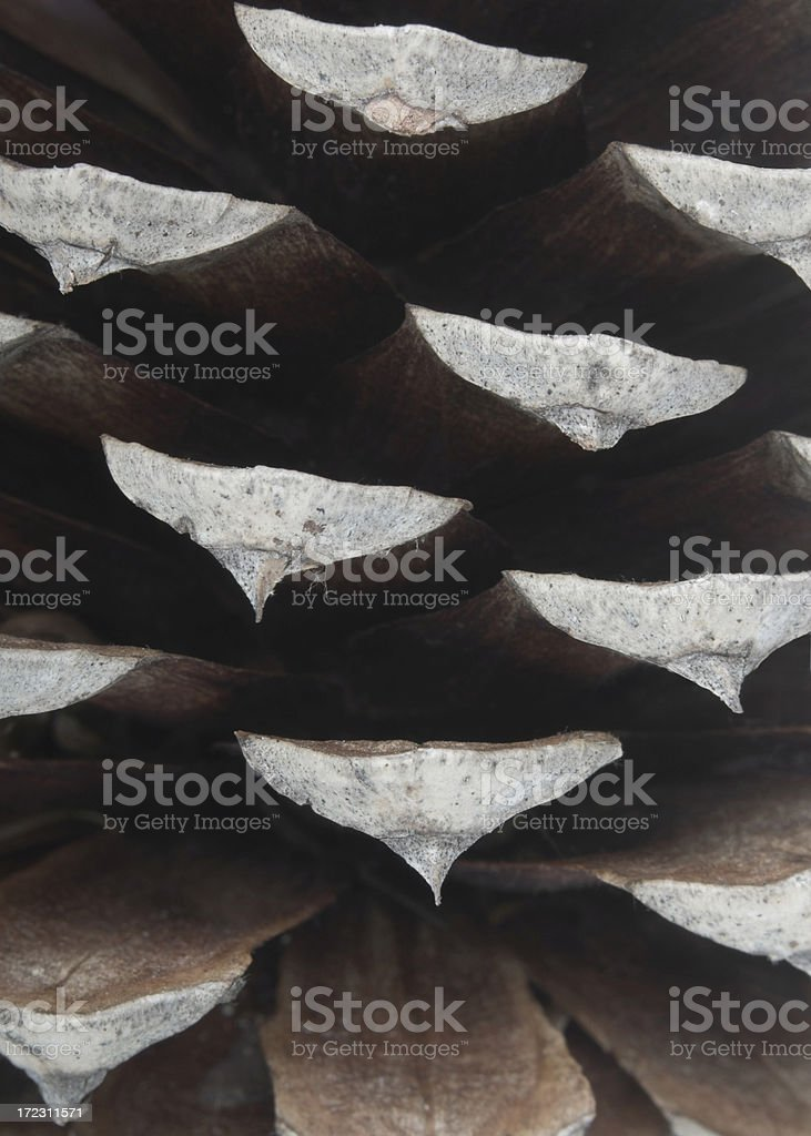 Detail of a Pine Cone stock photo