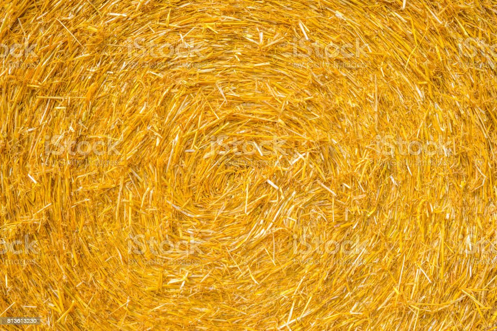 Detail of a round straw bale in sunlight stock photo