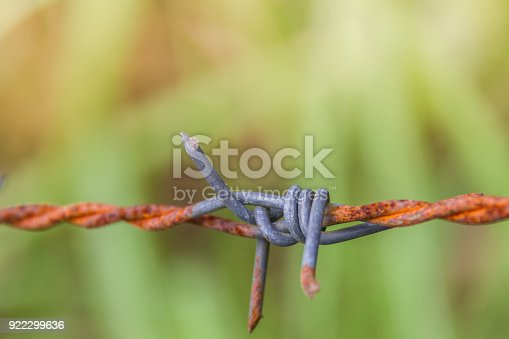 91708255 istock photo Detail of a rusty barbed wire fence on blurred nature background 922299636